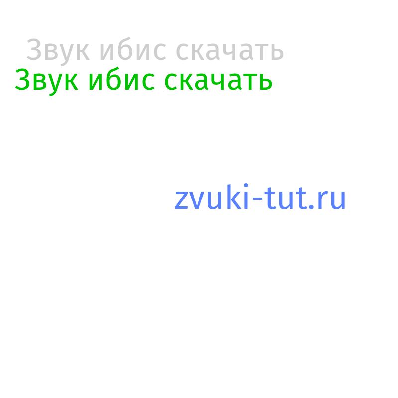 ибис Звук