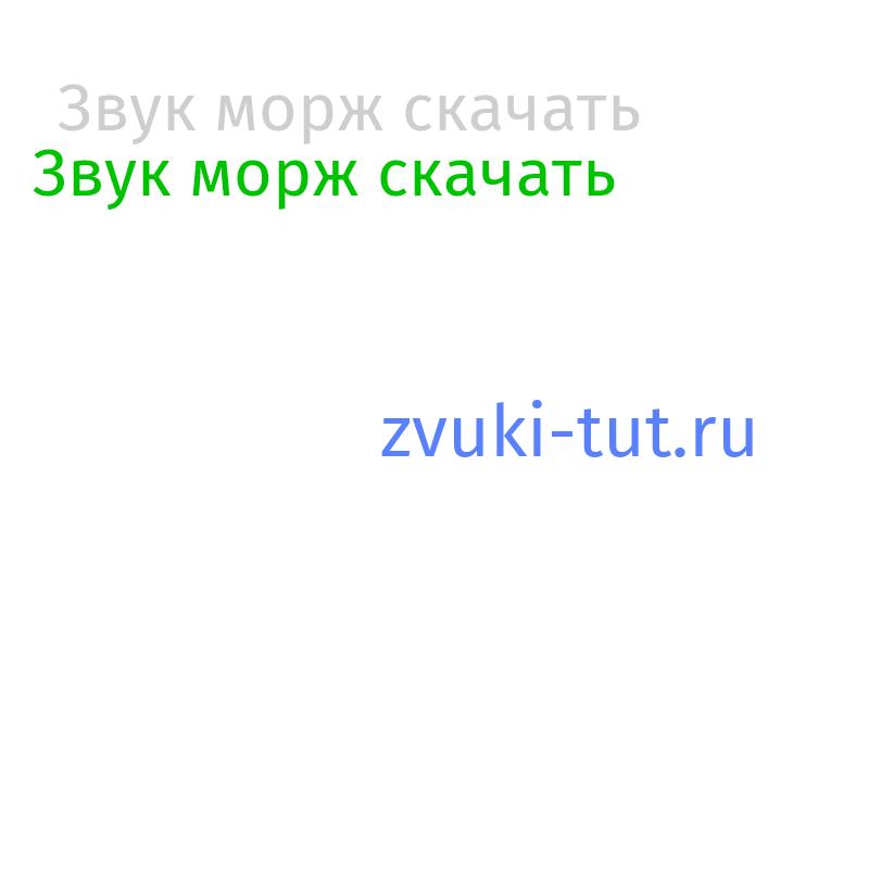 морж Звук