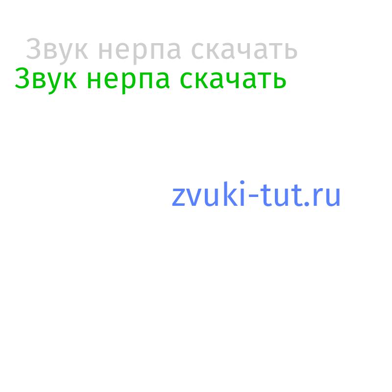 нерпа Звук