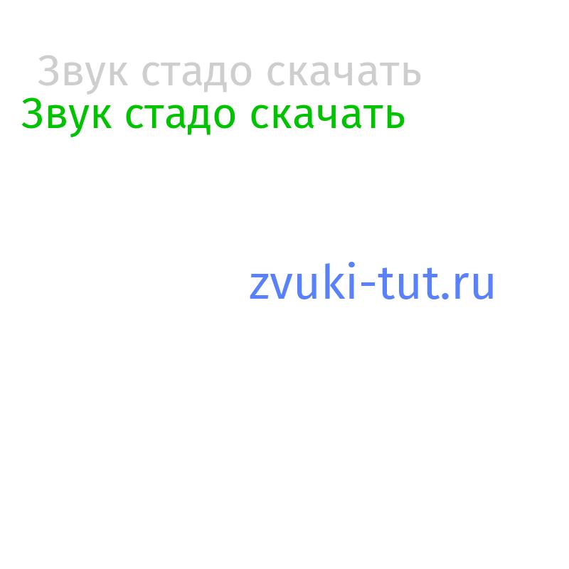 стадо Звук